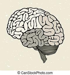 cerveau, goutte, sanguine, humain