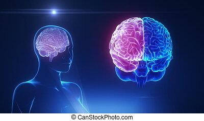 cerveau, hémisphère, concept, boucle, femme