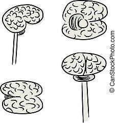 cerveau, humain, griffonnage