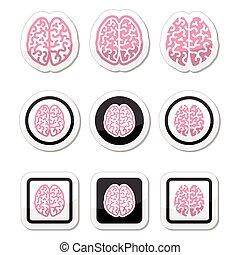 cerveau humain, icônes, ensemble, -, intelligenc
