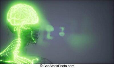 cerveau humain, radiologie, examen