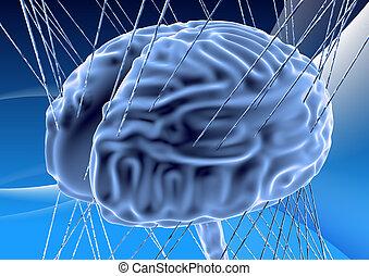 cerveau, humain, render, 3d