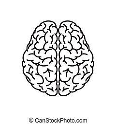 cerveau humain, vue, sommet, contour