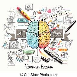 cerveau, ligne, doodles