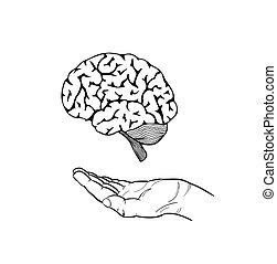 cerveau, main humaine
