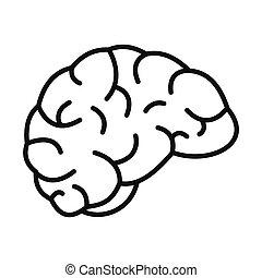 cerveau pensée, icône, style, contour