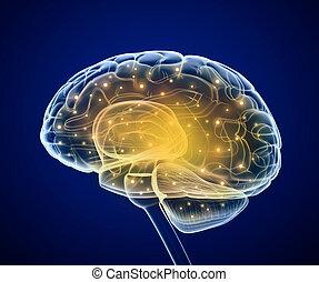 cerveau pensée, prosess, impulses.