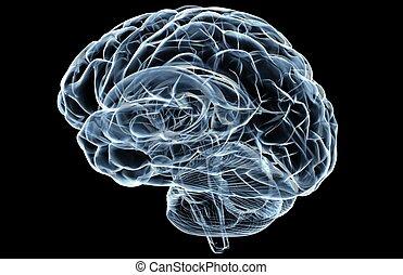 cerveau, rayon x