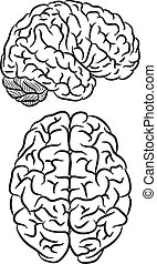 cerveau, silhouette