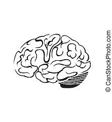 cerveau, symbole, vecteur, illustration