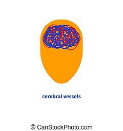 cerveau, vaisseaux