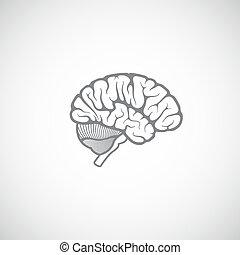 cerveau, vecteur, illustration, humain