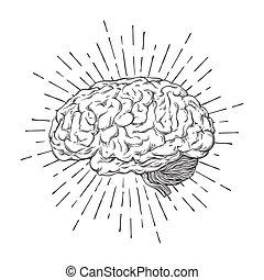 cerveau, vecteur, sunburst, humain, illustration