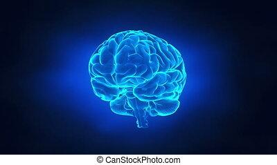 cerveau, voyage, concept