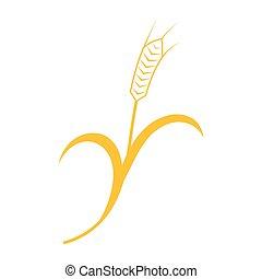 cerveja, orelhas, gráfico, trigo, centeio, ícones, embalagem, etiquetas, etc, ideal, vetorial, cevada, pão, ou, visual