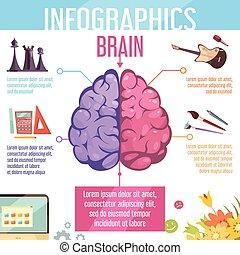 cervello, cerebrale, emisferi, funzioni, infographic, manifesto
