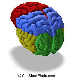 cervello, colorato