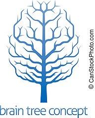 cervello, concetto, albero, conoscenza