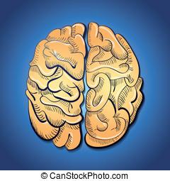 cervello, concetto, -, creatività