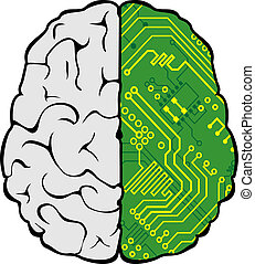 cervello, e, scheda madre