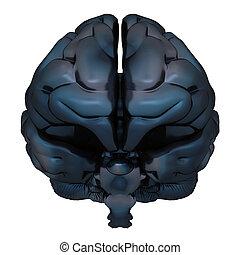 cervello, isolato, interpretazione, nero, bianco, 3d