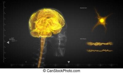cervello umano, raggi x, scansione, con, flashin