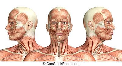 cervical, figura, médico, rotación, macho, actuación, 3d