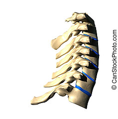 Cervical Spine - Side view - Cervical Spine - Lateral view /...