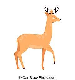 cervo, carattere, animale africano, selvatico