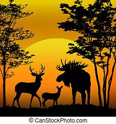 cervo, e, alce, silhouette