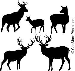 cervo, e, capriolo, silhouette, su, il, sfondo bianco