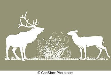 cervo, e, doe