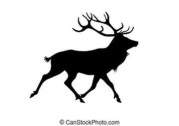 cervo, isolato, bianco, fondo