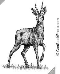 cervo, isolato, illustrazione, vettore, nero, incidere,...