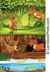 cervo, scena, natura