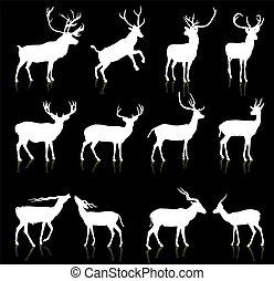 cervo, silhouette, collezione