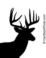 cervo whitetail, testa, silhouette, isolato, bianco