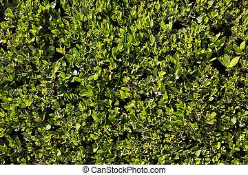 cespuglio, sfondo verde