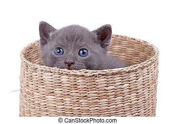 cesta, con, gatito