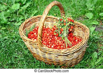 cesta, de, salvaje, fresas, en la hierba, en, luz del sol