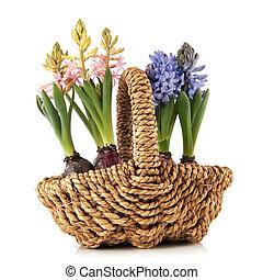 cesta, flores del resorte