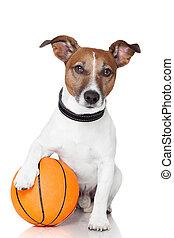 cesta, perro, pelota, ganador