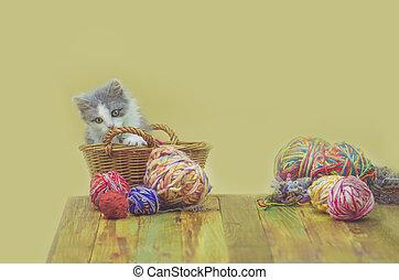 cesta, tricotando, ravels, gatinho