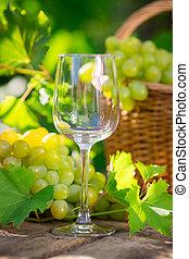 cesta, uvas brancas, grupo