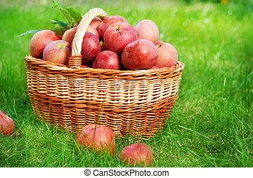 cesto, fresco, organico, mele