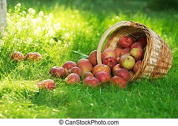 cesto, organico, mele