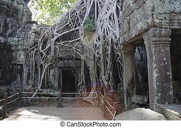 cette, angkor, ruines, prohm, wat, cambodge