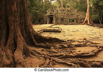 cette, promh, temple, angkor, secteur, siem, récolter
