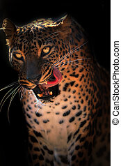 Ceylon leopard on the black background with open mouth