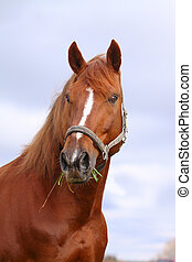 châtaigne, cheval